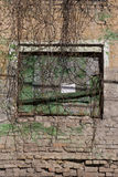 Weathered cracked brick wall with ivy Stock Photography