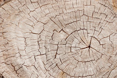 Weathered and cracked old brown tree trunk surface with annual rings close-up as background. View from above Royalty Free Stock Photos