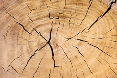 Weathered cross section of a tree trunk Royalty Free Stock Photo