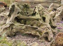 Weathered Driftwood. Stock Photos