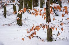 Weathered foliage in snowy forest. Beautiful winter nature background Stock Images