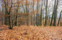 Weathered foliage on a tree. Leafless forest in autumn Royalty Free Stock Photos