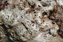 Weathered Gum wood Royalty Free Stock Images