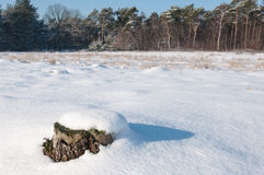 Weathered ha segato il ceppo coperto di neve di recente caduta Fotografia Stock Libera da Diritti
