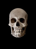 Weathered Human Skull Stock Images