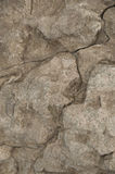 Weathered limestone rock abstract closeup Royalty Free Stock Images
