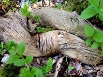 Weathered Logs Stock Image