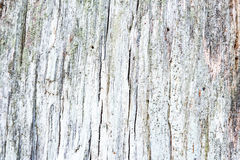 Weathered obsolete rough cracked textured wooden background Royalty Free Stock Photos