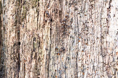 Weathered obsolete rough cracked textured wooden background Royalty Free Stock Images