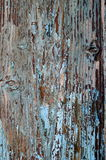 Weathered old peeled off wood blue tourquoise paint. From an old door Stock Images