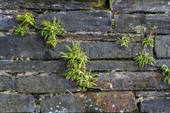 Weathered old slate wall background Stock Photo