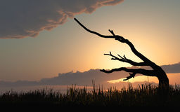 Weathered Old Tree Sunrise Sunset. Weathered old tree bent over from years in wind silhouetted against a sunrise, sunset background. Original Illustration Stock Photo
