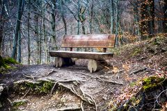 Weathered old wooden bench in the forest. In the fall Stock Images