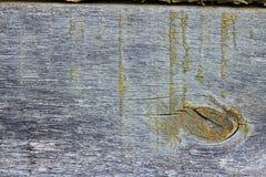 Weathered pintó el tablón de madera con el liquen y el musgo Foto de archivo libre de regalías