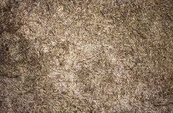 Weathered plywood detailed background texture Stock Photography