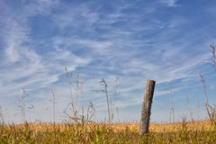 Weathered post by corn field Royalty Free Stock Photography