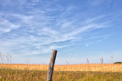 Weathered post by corn field Stock Images