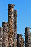 Weathered Posts Stock Photo