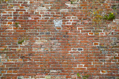 Weathered Red Brick Wall with Plants Growing on it Stock Photography