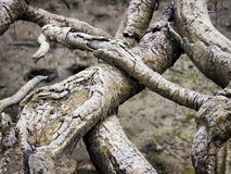 Weathered roots Royalty Free Stock Images