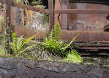 Fern and rusty steel girders. Weathered rusty detail showing et away steel girders and fern plants Royalty Free Stock Image