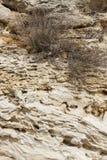 Weathered sandstone surface. Seacoast. Crimea, Sevastopol. Royalty Free Stock Images