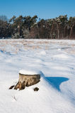 Weathered sawed stump covered with freshly fallen snow Royalty Free Stock Photos