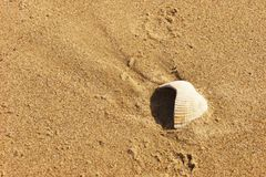 Weathered seashell in sand. A weathered, faded seashell exposed in coarse sand by the action of the tide Royalty Free Stock Photography