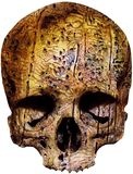 Weathered skull with worm holes Stock Photo