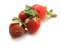 Weathered Strawberries Royalty Free Stock Photo