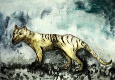 Weathered Tasmanian tiger. The dabbing technique near the edges gives a soft focus effect due to the altered surface roughness of the paper Royalty Free Stock Image