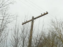 Weathered Telegraph Pole. An old, forgotten, and weathered telegraph pole photographed on an overcast day before the rain Stock Photography