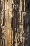 Weathered Telephone Pole. Closeup of the weathered and cracked surface on a wooden telephone pole. Vertical shot Royalty Free Stock Images