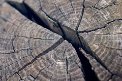 Weathered torn wooden block in cold light mood royalty free stock image