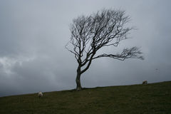 Weathered tree Stock Photography