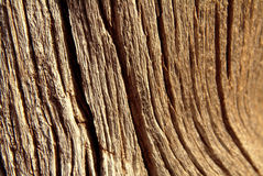 Weathered tree bark Stock Images