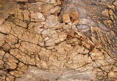 Weathered tree bark with cracks Royalty Free Stock Photo
