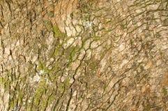 Weathered tree bark Royalty Free Stock Photo