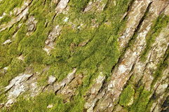 Weathered tree bark Stock Image