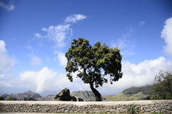Weathered Tree on a Rock Formation Royalty Free Stock Photo