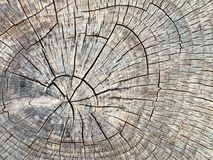 Weathered tree stump. Close up of the weathered surface of a tree stump Royalty Free Stock Image