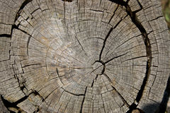 Weathered Tree Stump. Cross section of an old weathered tree stump Stock Photography