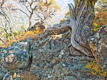 Weathered tree trunk in rocky desert mountains Stock Photos