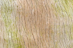 Weathered tree trunk Royalty Free Stock Photography