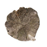 Weathered tree trunk cross section Royalty Free Stock Photo