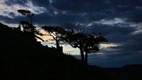Weathered trees at nightfall Stock Photo