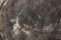 Weathered walnut log Stock Image