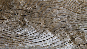 Weathered wood Stock Image