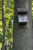 Weathered Wood Birdhouse in the Forest Royalty Free Stock Images