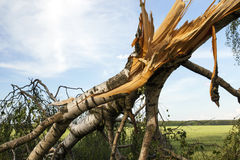 Weathered Wood Broken Stock Images